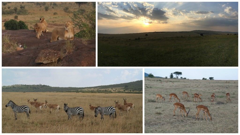 Game drive in the Maasai Mara